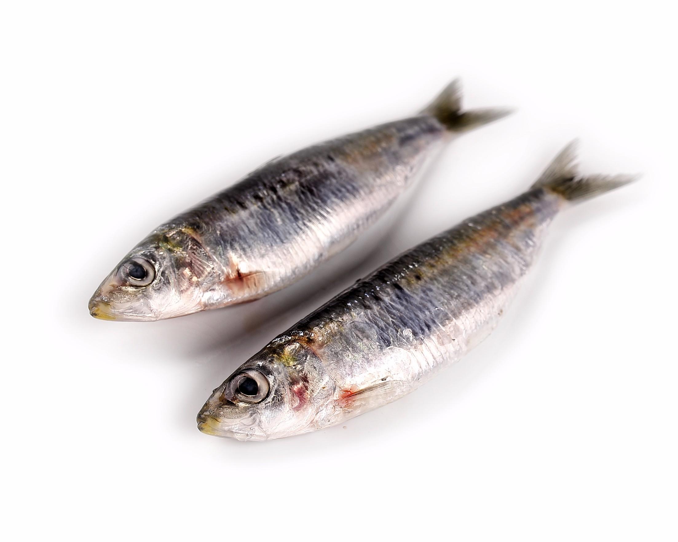 sardinas que propiedades tiene
