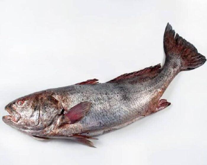 Corvina Al Corte | Pescados Saturnino