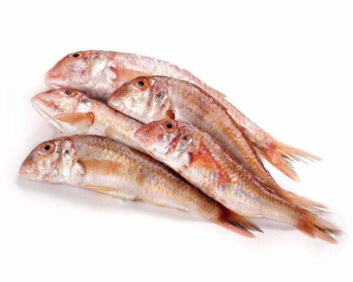 Salmonete | Pescados Saturnino
