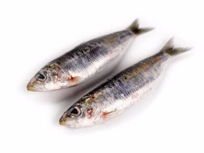 sardina fresca a domicilio